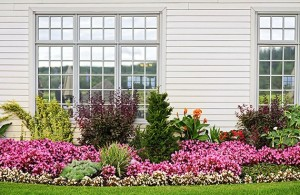 beautiful flowers in front of a newly installed windows on a home