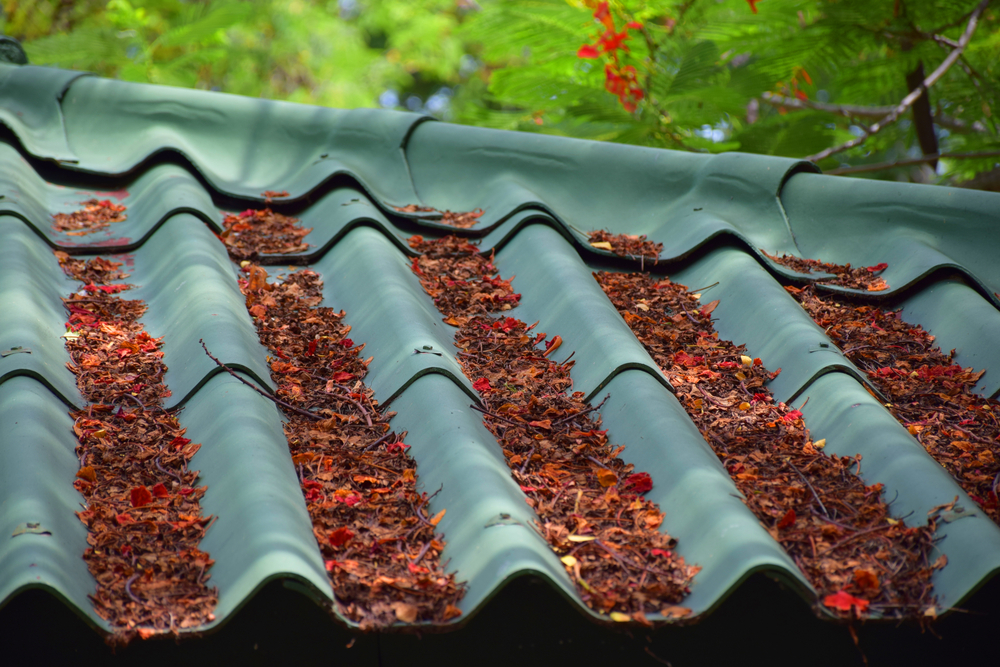 leaves on roof