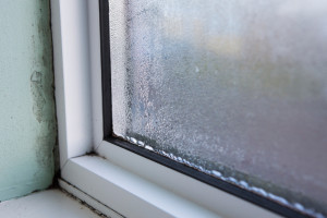 mold windows