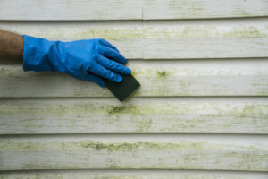 mold on vinyl siding