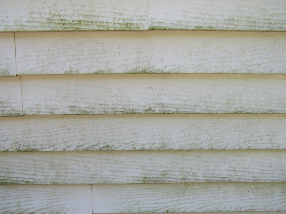 mold-on-siding